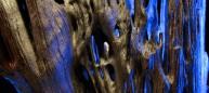 suaro.detail6w
